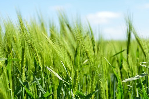 Развивайте конкурентно земеделие с култиваторите MASS